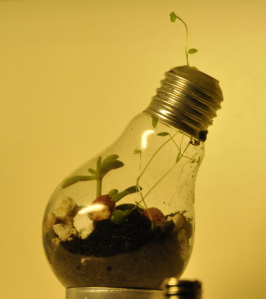 http://lakloplak.deviantart.com/art/Lightbulb-terrarium-2-353173508